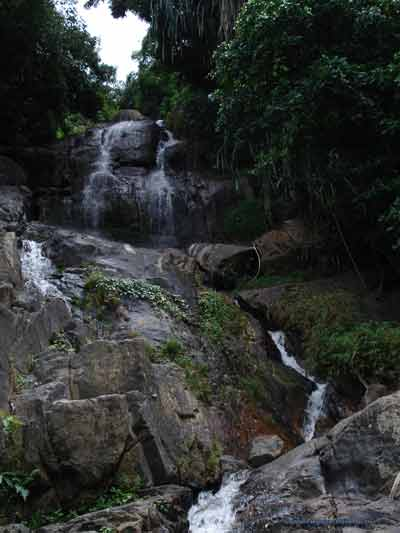 photo 20 English dense forest and visit the surrounding waterfalls on Koh Samui in Thailand 400